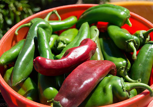 Join us for a spicy event as we roast green chilis at Apple Annie's Produce Farm in Willcox, Arizona!