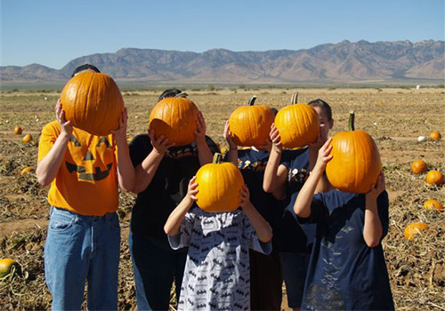It's our fall Pumpkin Celebration at Apple Annie's Produce Farm in Willcox, Arizona and our pick-your-own pumpkin patch is full of gorgeous gourds ready to be picked!