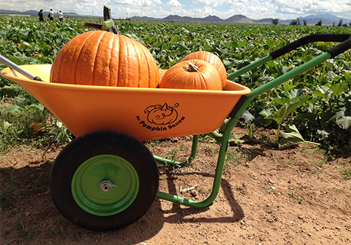 Pick-your-own pumpkins from our pumpkin patch this fall from Apple Annie's Orchard, Farm and Country Store in Willcox, Arizona!