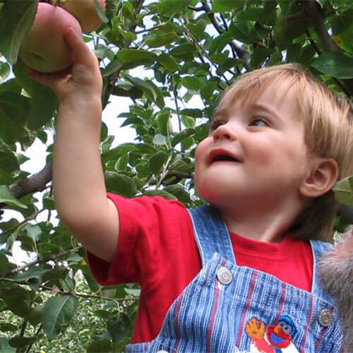 Pick-your-own farm fresh apples, pears, and peaches from our fruit orchards in Willcox, Arizona!
