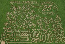 Can you find your way through our 20 acre corn maze at Apple Annie's Produce Farm in Willcox, Arizona?